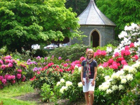Greenbank, WA: rhododendrons