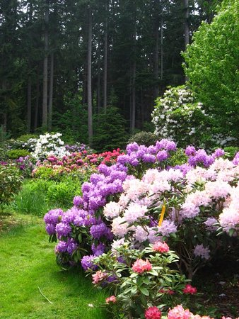Greenbank, Ουάσιγκτον: big blooms