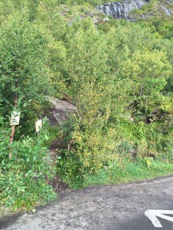 Reine, Norwegia: 已經手腳並用了,但還是無法克服內心恐懼