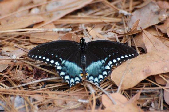 Folkston, GA: Butterfly
