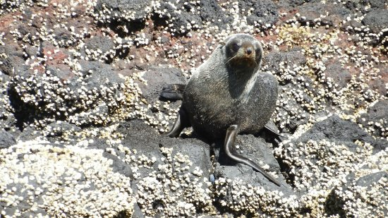 Coast up Close: Curious fur seal