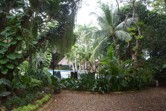 阿羅娜熱帶海灘度假酒店張圖片