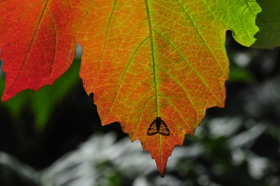 RAPAURA Watergardens: passionfruit hopper