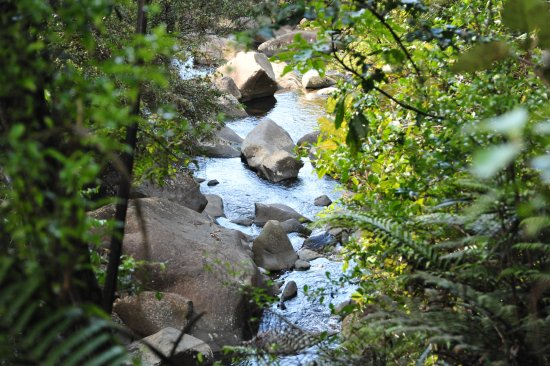 RAPAURA Watergardens: Tapu Creek runs down to Tapu Beach.