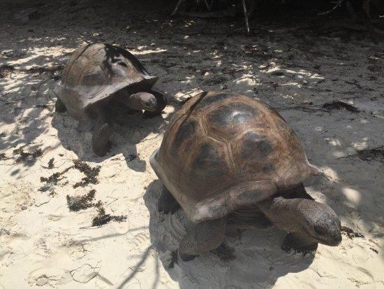 เกาะพราสลิน, เซเชลส์: photo3.jpg