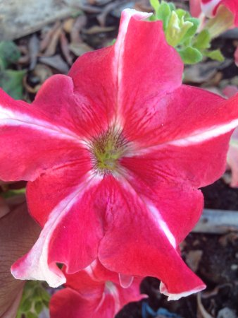Al-Riyam Park: Another flower
