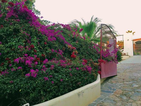 Casa Bentley: Bougainvillea in the beautiful garden.
