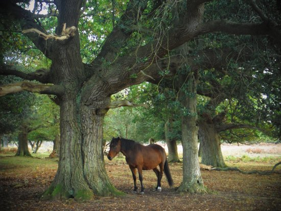 New Forest Walking Adventures