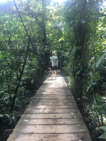 Tenorio Volcano National Park, Costa Rica: path to the hot springs