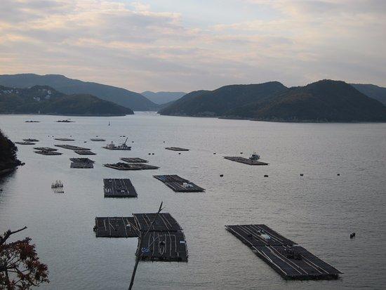 Hinase Islands: 牡蠣の養殖