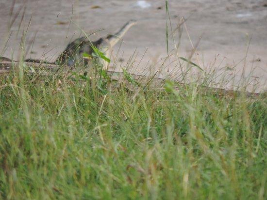 Visakhapatnam Zoo: croc