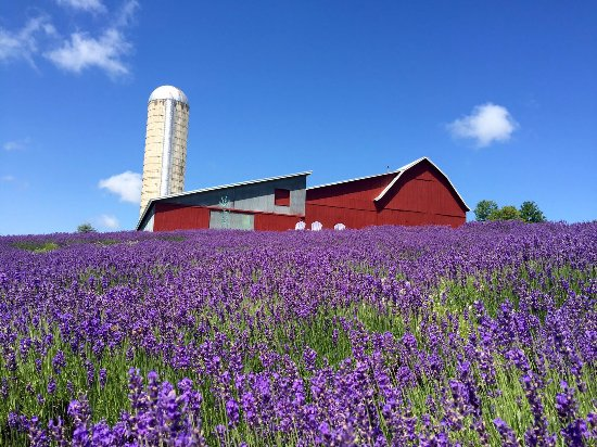 Boyne City, Мичиган: The barn and lavender fields
