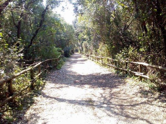 Riserva Naturale di Tor Caldara : viale torre