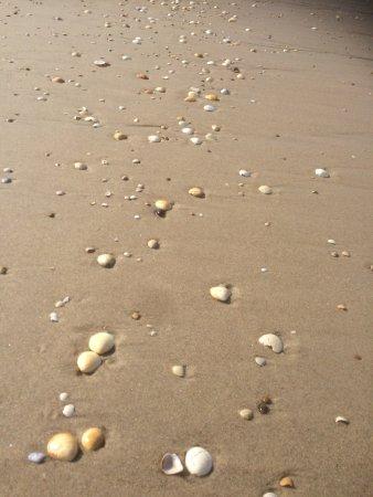Plage de Praia da Vagueira