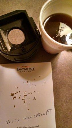 Baymont Inn & Suites Orange Park Jacksonville: more ants