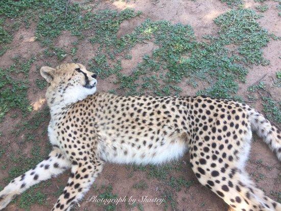Ukutula Lion Park : photo8.jpg