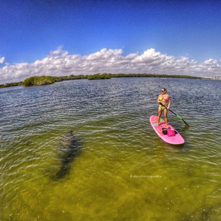 ec99a16be7b8 South Florida Paddle: manatee moment at MacArthur State park Singer Island