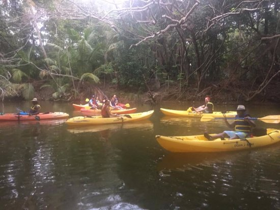 Humacao Nature Reserve: Kayaking