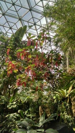 Missouri Botanical Garden Picture Of Missouri Botanical