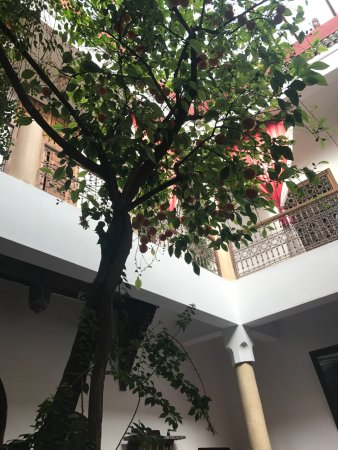 Riad El Zohar: Beautiful orange tree in courtyard