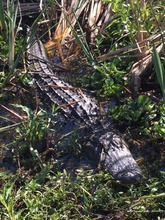 Spirit of the Swamp Airboat Rides: photo0.jpg