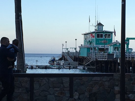 Avalon seafood fish chips restaurant reviews phone for Catalina island fishing charters