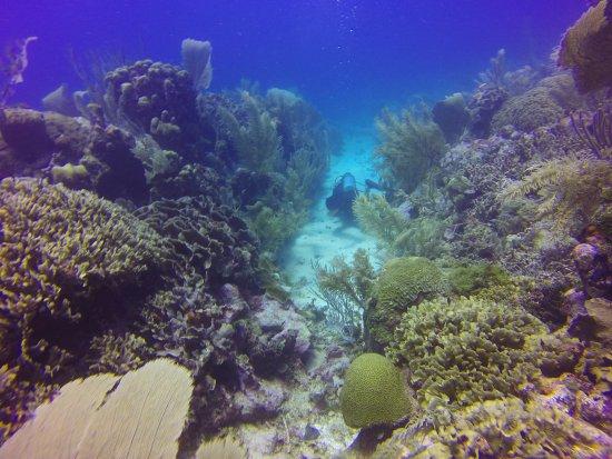 Utila, Honduras: Fun dives