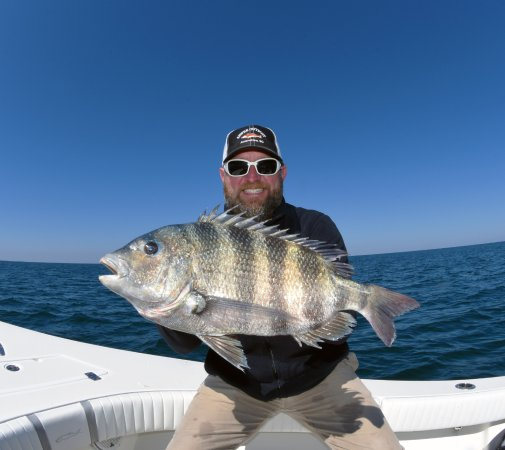 Charleston Sport Fishing: A HUGE Sheepshead caught while fishing with Captain Chuck Griffin