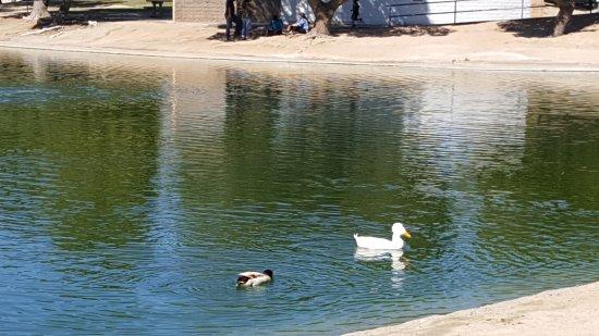 Apollo Community Regional Park: Quack