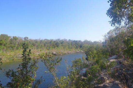 Key Largo Hammocks State Botanical Site : Between pathways hidden water pond