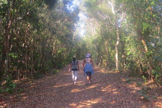 Key Largo Hammocks State Botanical Site : Pathway