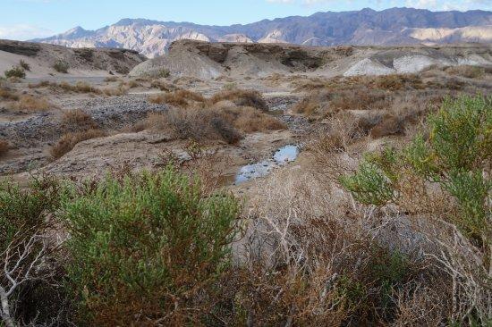 Salt Creek Interpretive Trail : Salt Creek Trail
