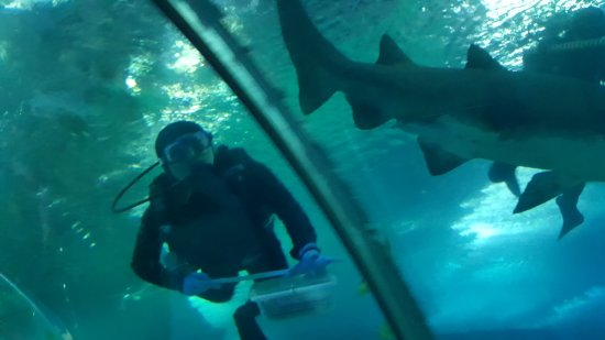 Qingdao Underwater World: 20170403_144313_large.jpg
