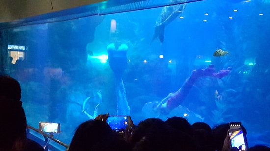 Qingdao Underwater World: 20170403_145150_large.jpg