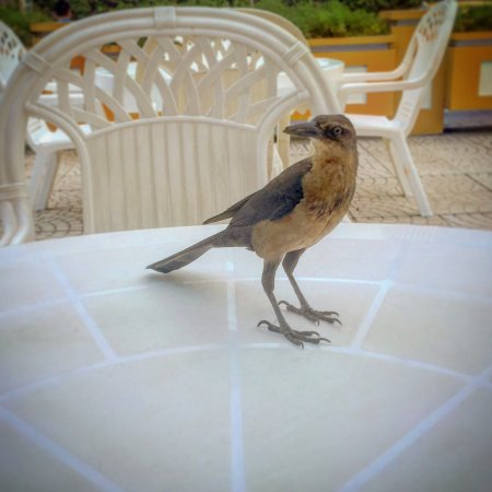 Hotel San Martin Cartagena: The entertaining grackles at breakfast; a view from the room