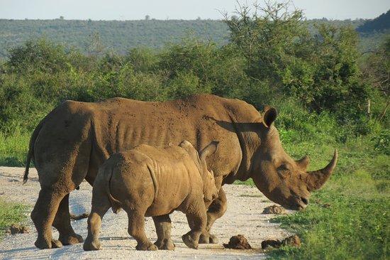 Zeerust, Afrique du Sud : Rhino and child