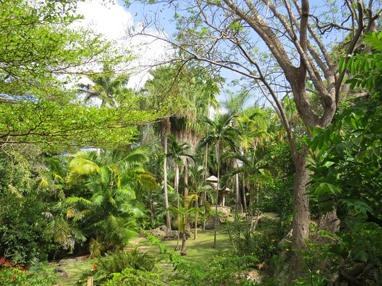 Bathsheba, Barbados: The gardens