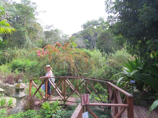 Bathsheba, Barbados: One of the garden bridges