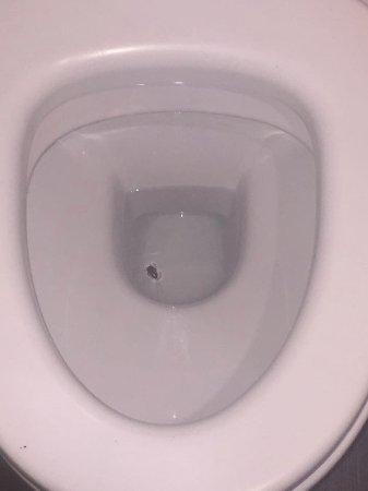 El Cenador: 3 Cafards dans les toilettes