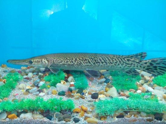 Neyyar Wild Life Sanctuary: Fishes