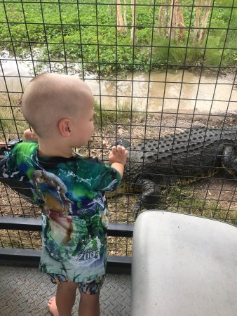 Cannonvale, Australia: Our amazing day at Bredl's wildlife farm