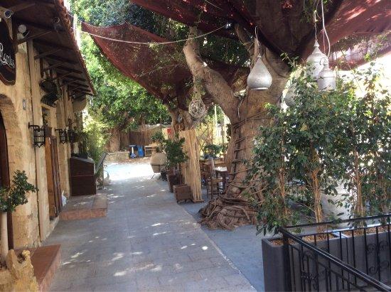 Terrasse ombragée - Picture of Romios, Rhodes Town - TripAdvisor