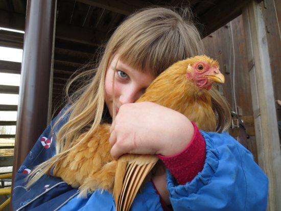 Stokke, Norwegia: Aarholt-tunet Gjestegård har mange dyreslag som familiene på bondegårdsferie kan stelle og kose