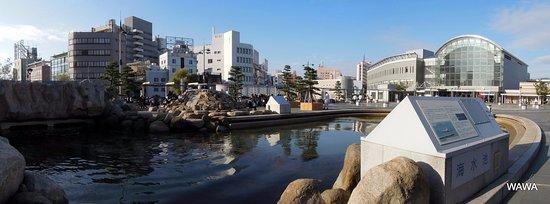 Takamatsu Ekimae Kaisui Park: 高松駅前 クロダイの泳ぐ海水池