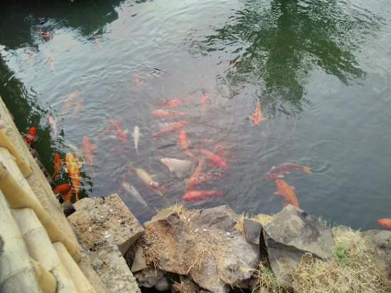 Pune Okayama Friendship Garden: Fish