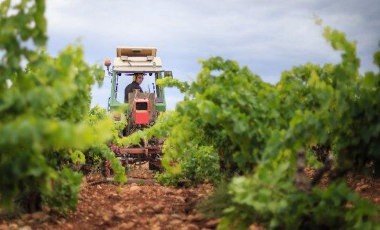 Tavel, Frankrijk: Le travail des Vignes du Château de Manissy