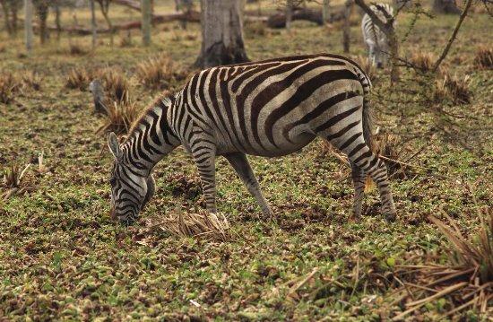 Rift Valley Province, Kenya: Lake Naivasha