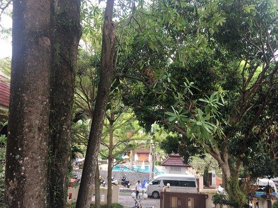 Garden Home Kata Foto