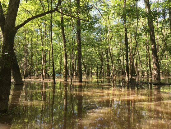 Pearl River, LA: the swamp was incredibly peaceful
