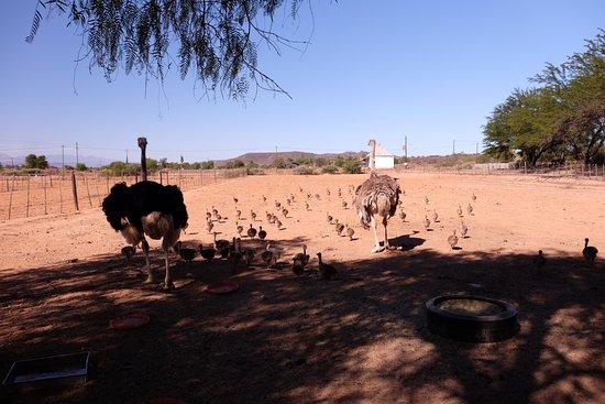 Highgate Ostrich Show Farm: Strausse